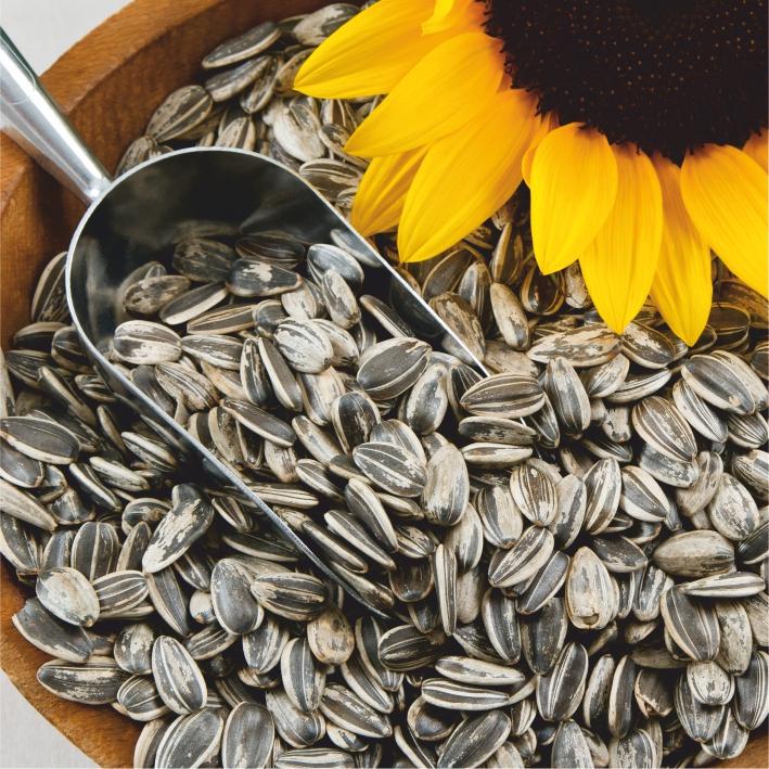 Hạt Hướng Dương. Sunflower seed